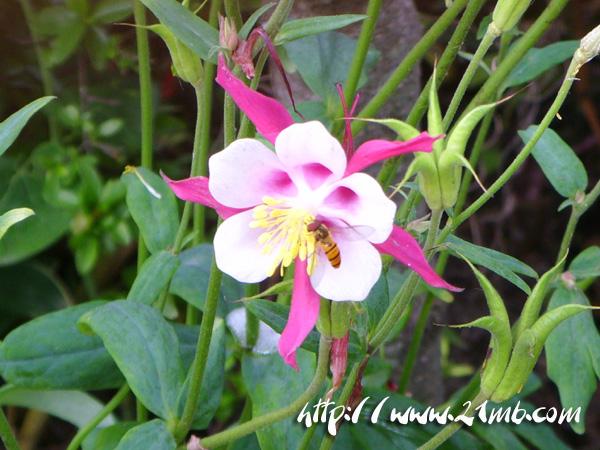 꽃.jpg