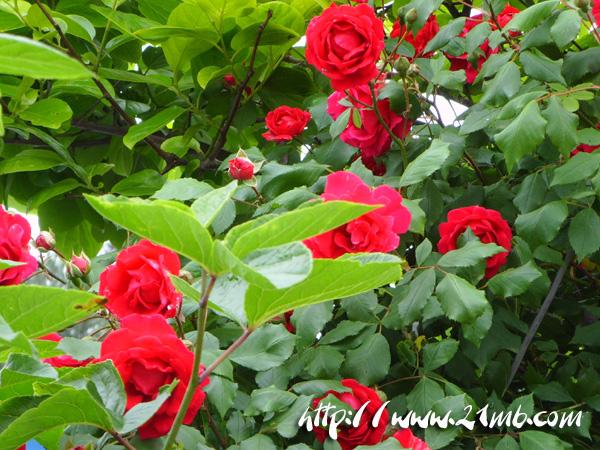 꽃2.jpg